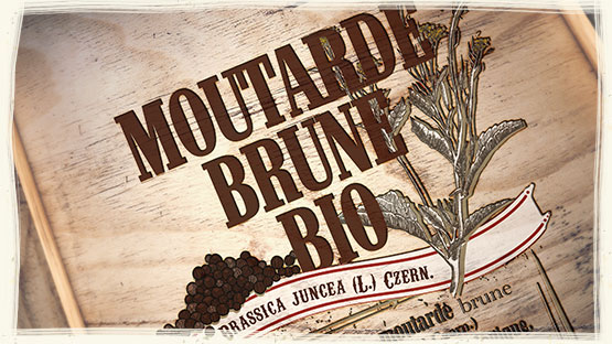 MOUTARD BRUNE POWDER